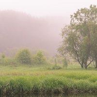 Утро  - Туман :: Анатолий