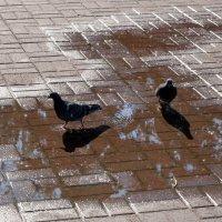 Композиция из лужи, голубей и теней :: Полина Потапова