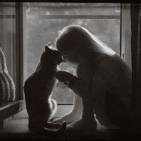 С кошкой на окошке 3 (секреты) :: Наташа Морозова