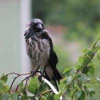 дождь целый день. :: victor leinonen
