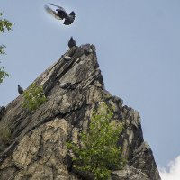 Голуби на скале :: Андрей Жданов