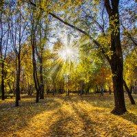 Осень в парке :: Юрий Шапошник