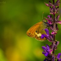 Бабочка красавица) :: Julia Art