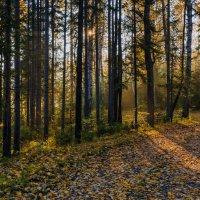 Утро в лесу :: vladimir