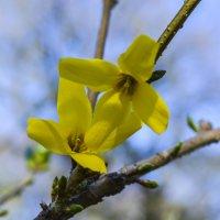 Весна :: Лариса Лунёва