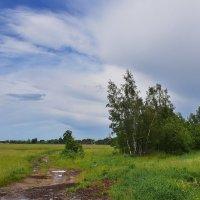 После  дождика. :: Валера39 Василевский.