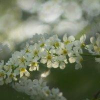 Цветы :: Анна Кокарева