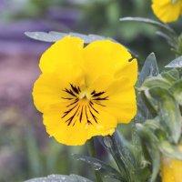 просто цветок :: Виталий Макаров
