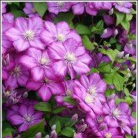 Летний сад :: lady v.ekaterina