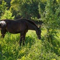 Конь :: Анастасия