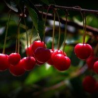 vit5  вишневый рай :: Vitaly Faiv