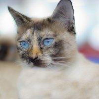 на выставке кошек :: Светлана З