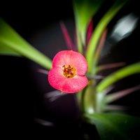Цветок :: Николай П