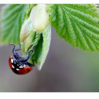spring - 3 :: Linda Ratuta