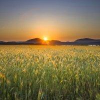 #Крым #Байдарская долина № 2 :: Дима Семёнов