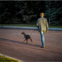 Прогулка с собачкой :: Алексей Головин