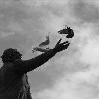 Мои стихи летят как птицы :: galina bronnikova