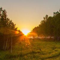 утро в лесу :: evgeny