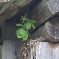 И на гнезде растут деревья :: Андрей Скорняков