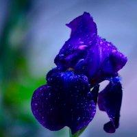 Цвет ночи :: Ирина Безверхова