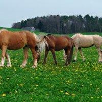 очень длинная лошадь :: Elena Wymann