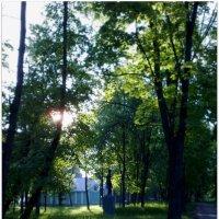 Утро в парке :: Владимир ...