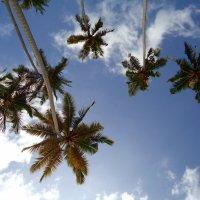 Пальмы в небе. :: Вера Щукина