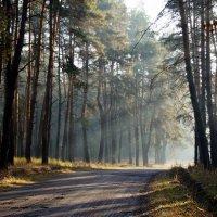 В лес заглянуло Солнце :: Дарья Фисун