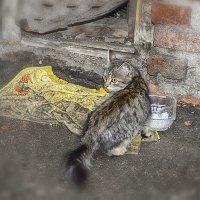 Бездомный котёнок :: Валерий Кабаков
