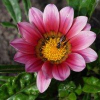 Цветок :: MPS