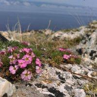 Байкал :: Елизавета Забродина