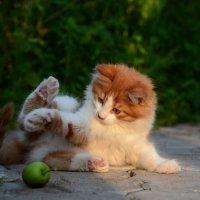 Эх яблочко- куда ты катишься ? :: Александр Бойко