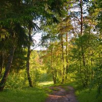 По лесной дорожке :: Александр