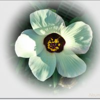 Свет цветка :: Лидия (naum.lidiya)