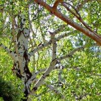В летнем лесу :: alemigun