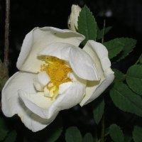 В саду :: Ирина Фирсова