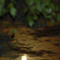 Июньская ночь :: sergej-smv
