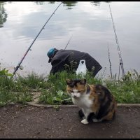 С таким рыбаком буду без обеда! :: Алексей Патлах