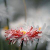 Цветы :: Яна
