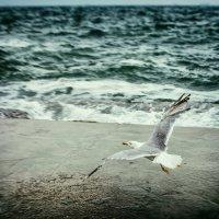 Flying over the sea :: VV Kurov Куров