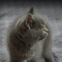 vit5  кто там? :: Vitaly Faiv