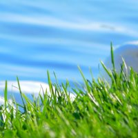 Белая утка в парке Северный. г. Хабаровск :: Даниил Гришин