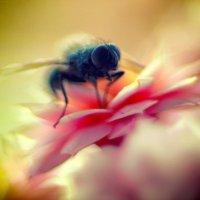 Цветок и муха... :: Inessa Shabalina