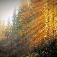 Солнечный прорыв :: Сергей Чиняев