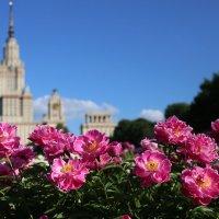 Ботанический сад МГУ. Цветут пионы :: Маргарита