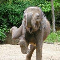 танцующий слон :: Юрий Захаров