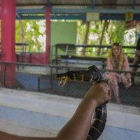 Мангровая змея :: Vadim Odintsov