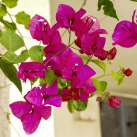цветочек :: Ефим Хашкес