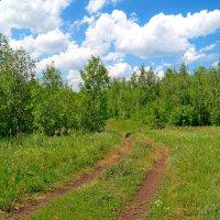 По лесным дорогам :: Андрей Заломленков