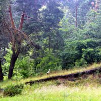Приоткрыл лес завесу чудес, красотою своей покоряя. :: Валентина ツ ღ✿ღ